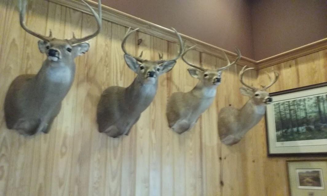 deer heads